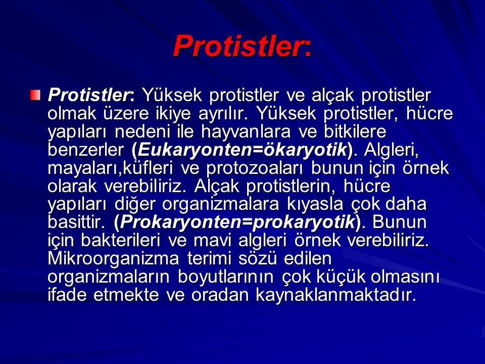 Protistler: