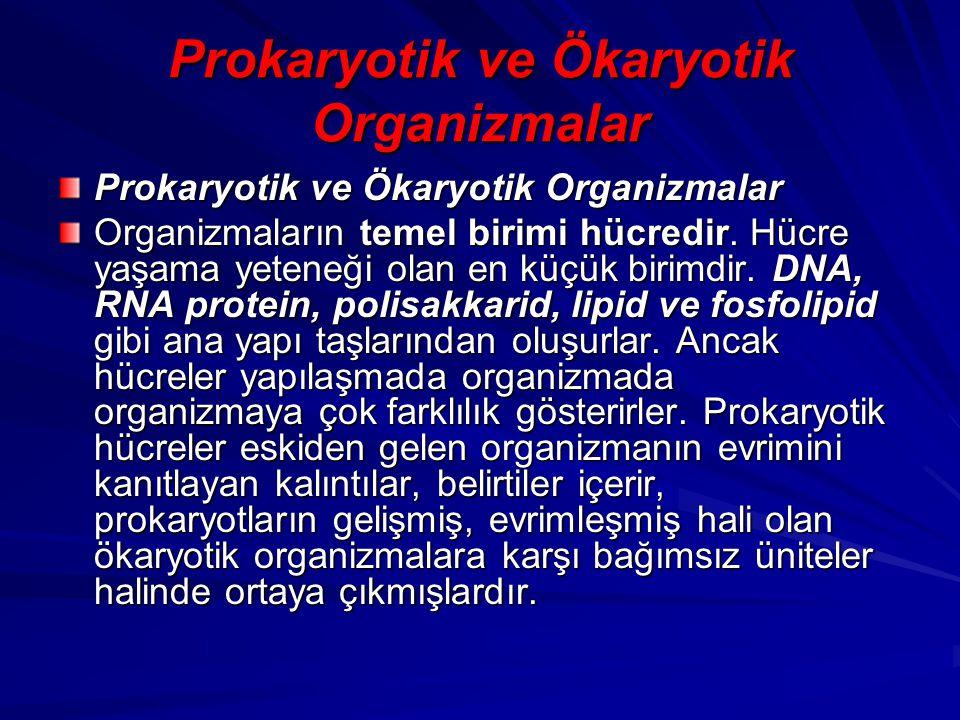 Prokaryotik ve Ökaryotik Organizmalar