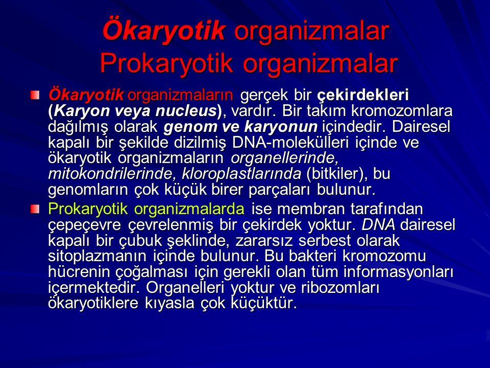Ökaryotik organizmalar Prokaryotik organizmalar