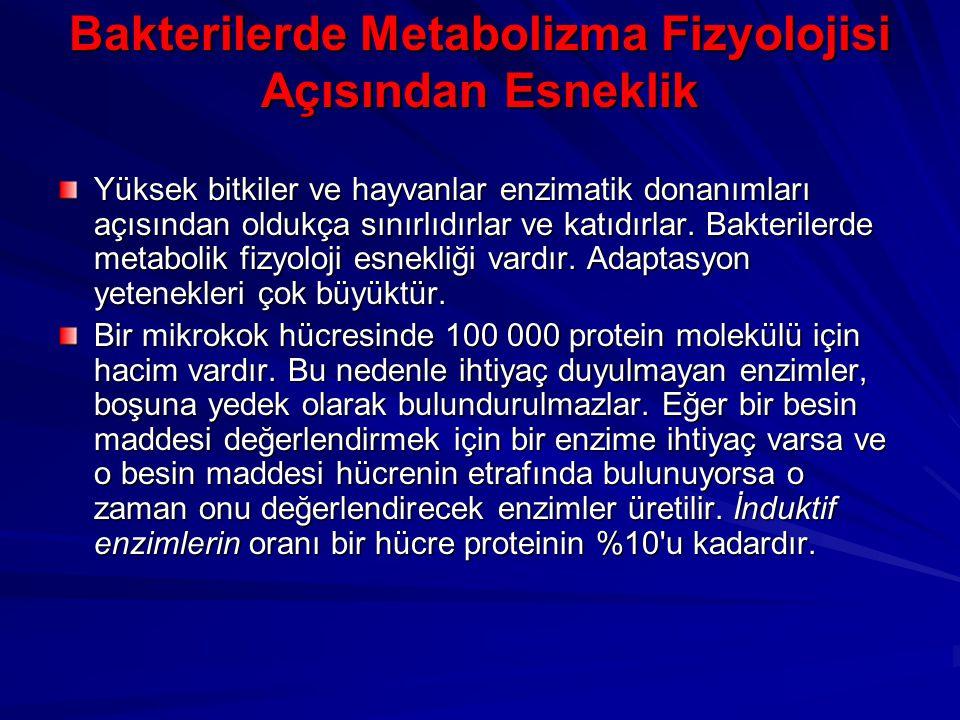 Bakterilerde Metabolizma Fizyolojisi Açısından Esneklik