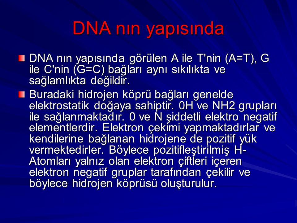 DNA nın yapısında DNA nın yapısında görülen A ile T nin (A=T), G ile C nin (G=C) bağları aynı sıkılıkta ve sağlamlıkta değildir.