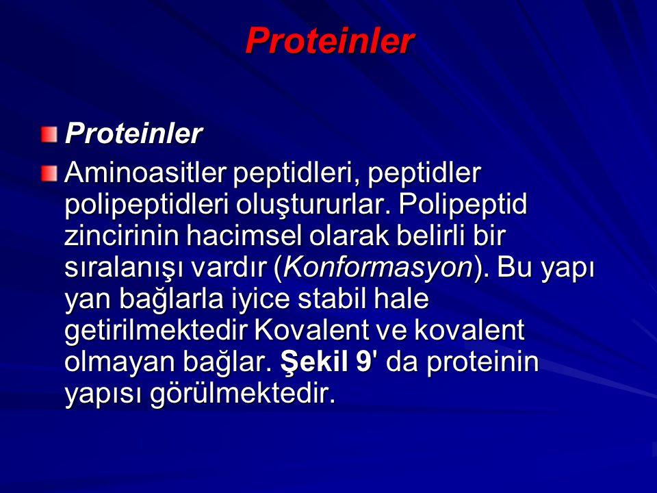 Proteinler Proteinler