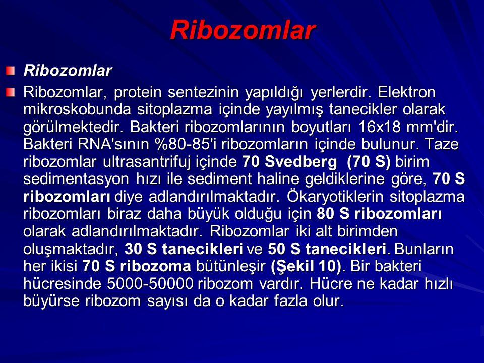 Ribozomlar Ribozomlar