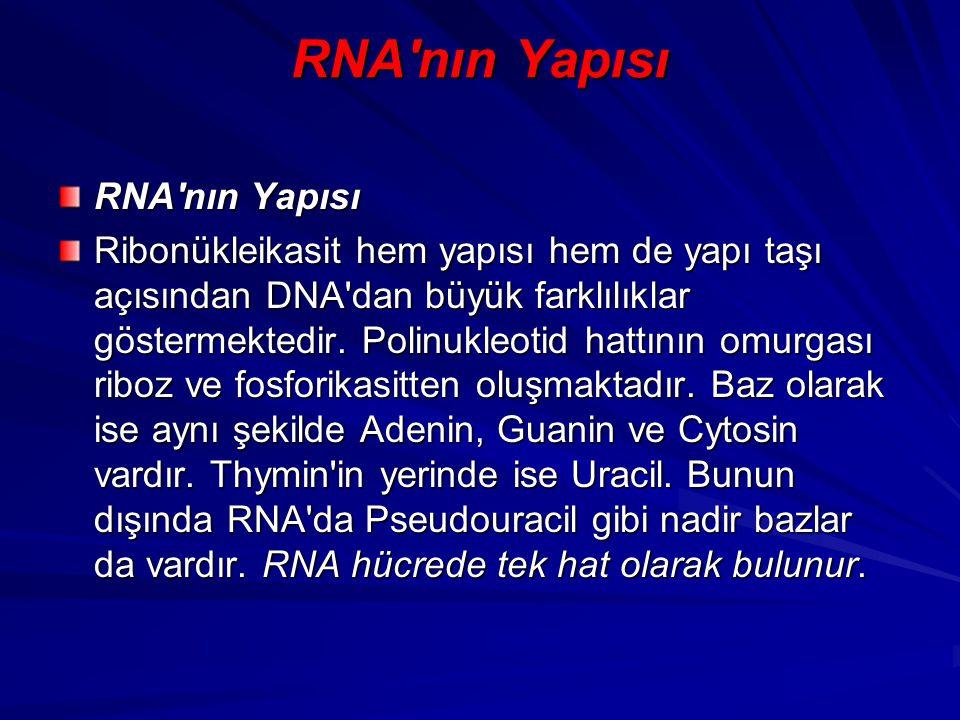 RNA nın Yapısı RNA nın Yapısı