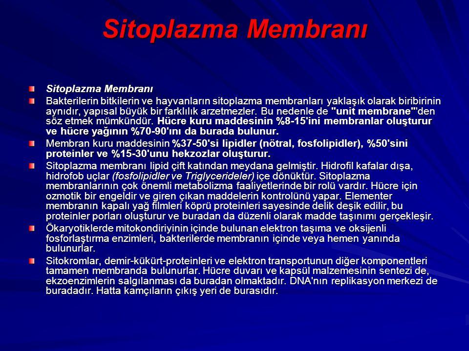 Sitoplazma Membranı Sitoplazma Membranı