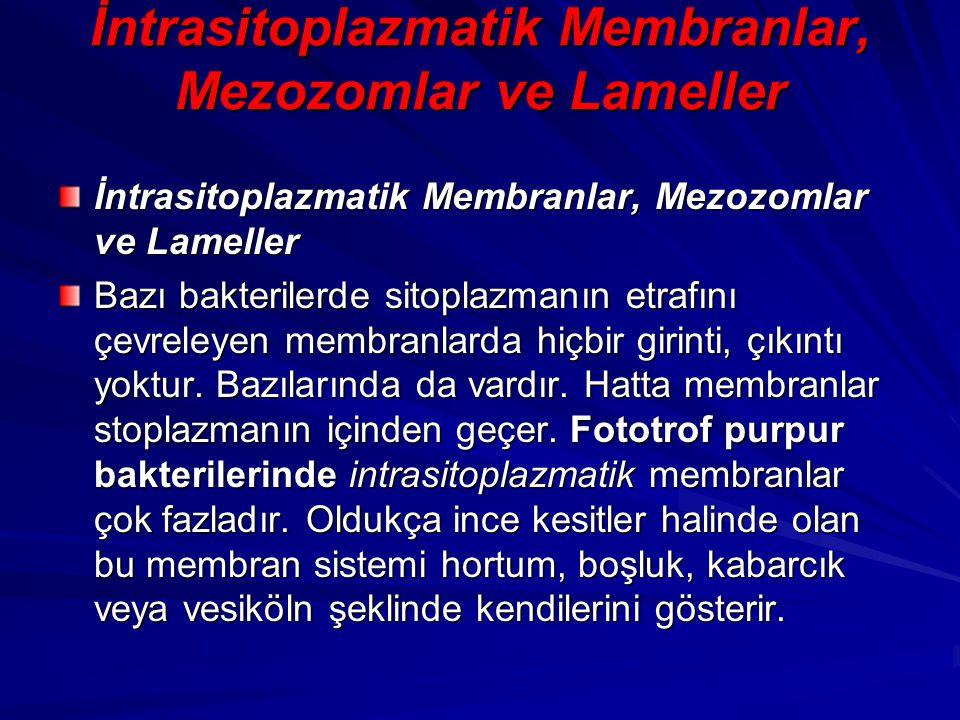 İntrasitoplazmatik Membranlar, Mezozomlar ve Lameller