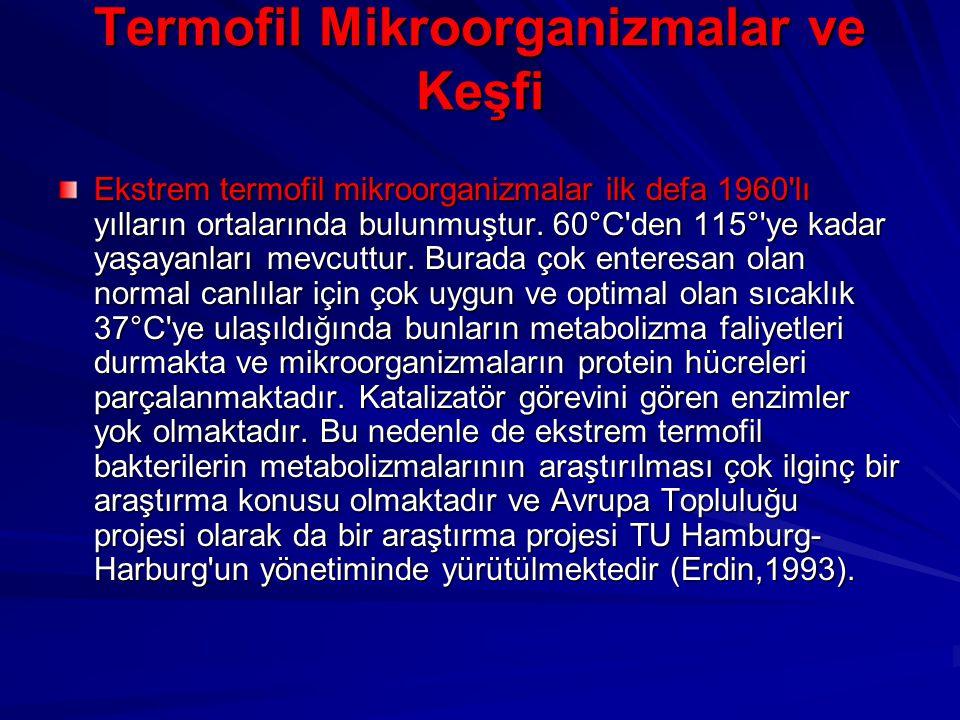 Termofil Mikroorganizmalar ve Keşfi