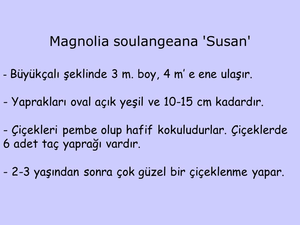 Magnolia soulangeana Susan