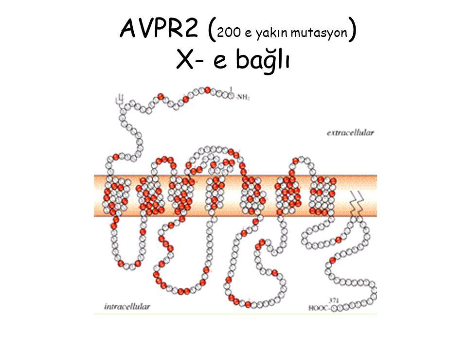 AVPR2 (200 e yakın mutasyon) X- e bağlı