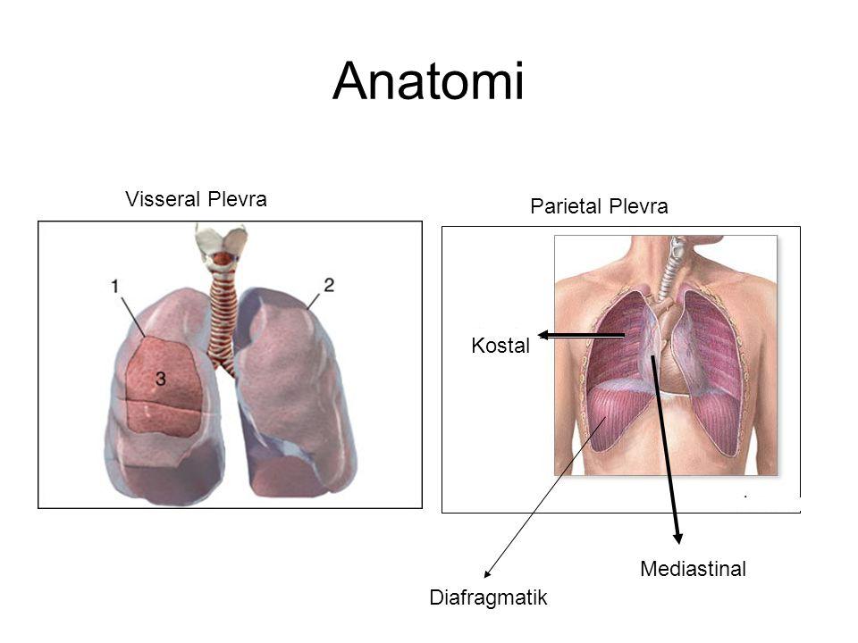 Anatomi Visseral Plevra Parietal Plevra Kostal Mediastinal