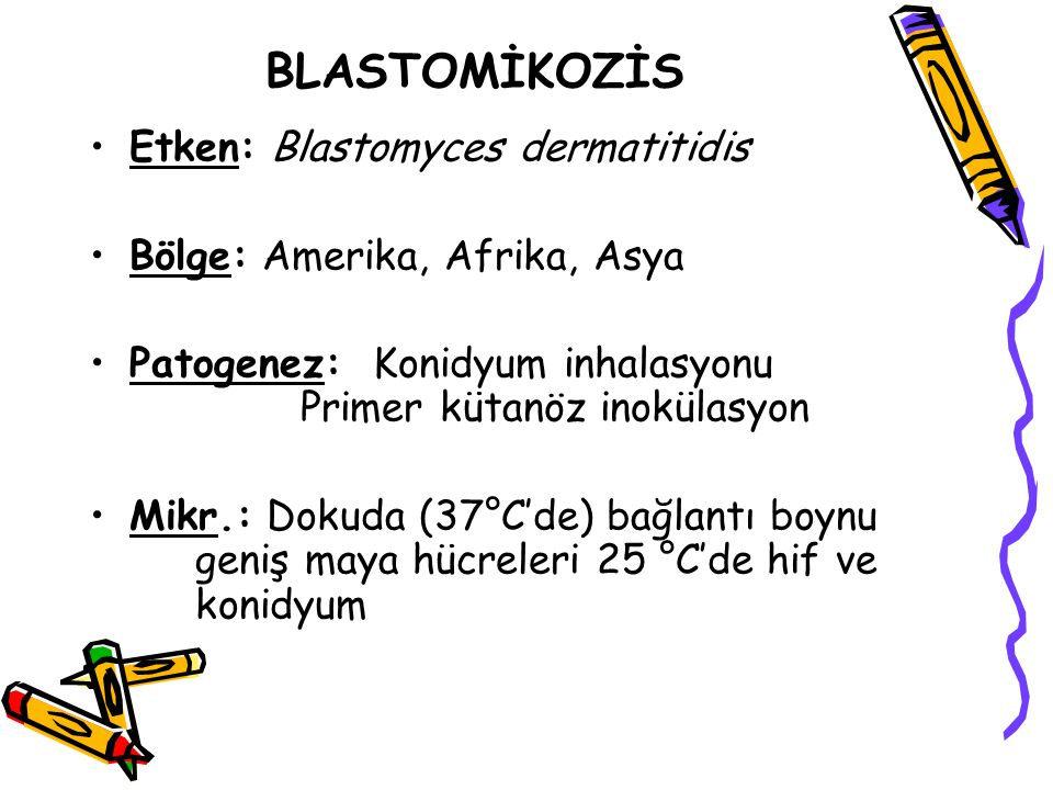 BLASTOMİKOZİS Etken: Blastomyces dermatitidis