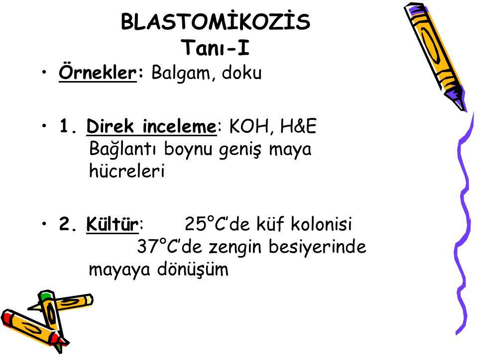BLASTOMİKOZİS Tanı-I Örnekler: Balgam, doku