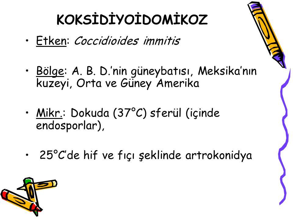 KOKSİDİYOİDOMİKOZ Etken: Coccidioides immitis