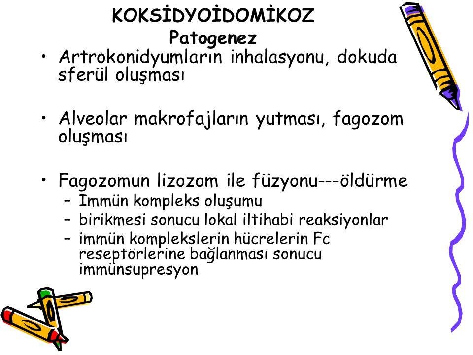KOKSİDYOİDOMİKOZ Patogenez