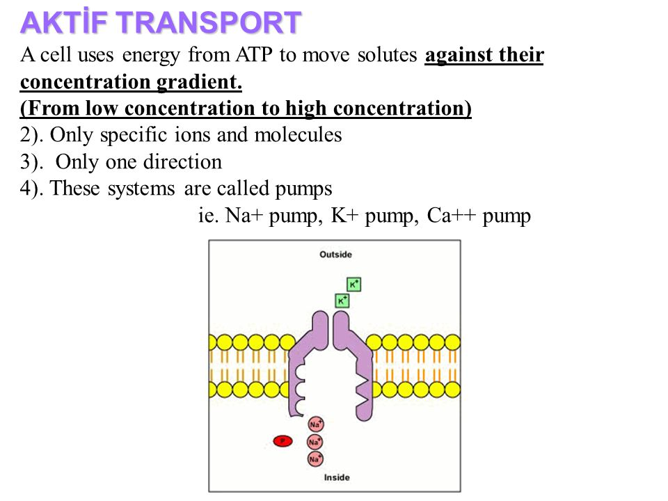 AKTİF TRANSPORT A cell uses energy from ATP to move solutes against their concentration gradient. (From low concentration to high concentration)
