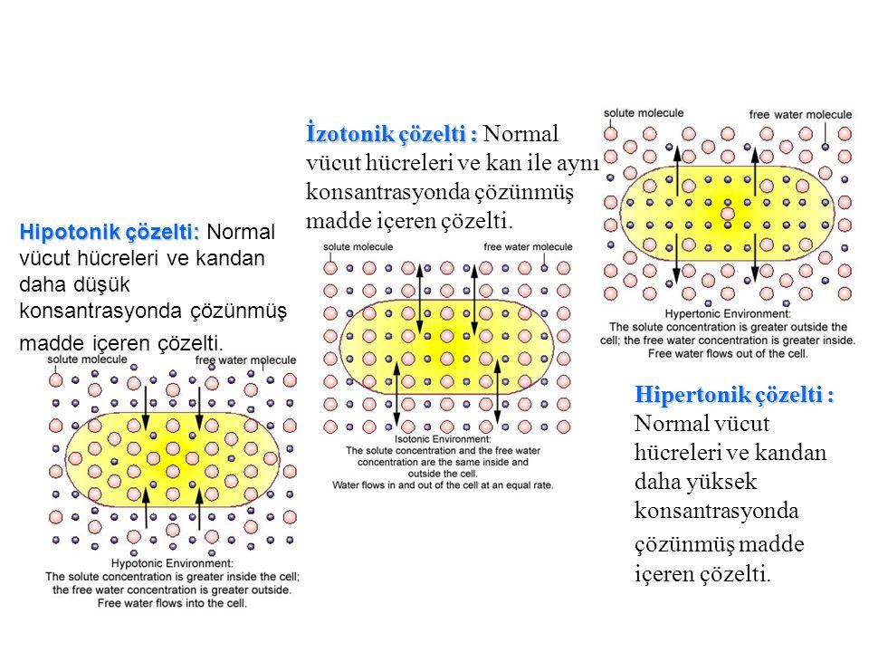İzotonik çözelti : Normal vücut hücreleri ve kan ile aynı konsantrasyonda çözünmüş madde içeren çözelti.
