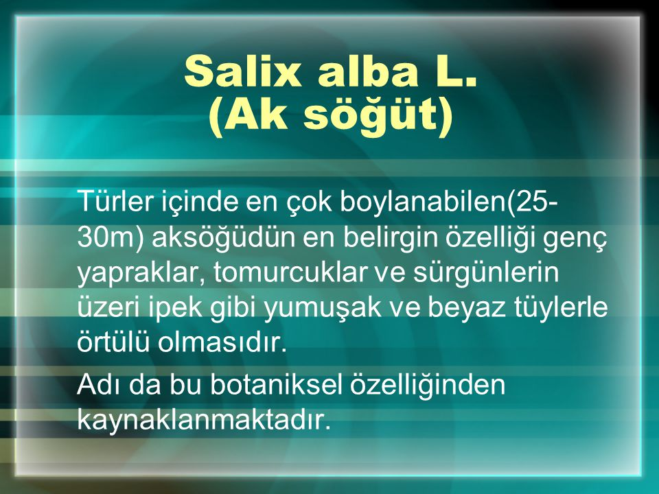 Salix alba L. (Ak söğüt)