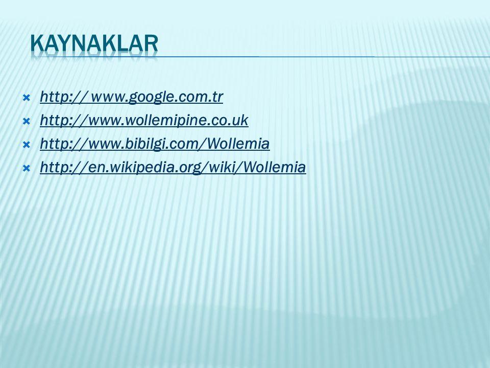 kaynaklar http:// www.google.com.tr http://www.wollemipine.co.uk