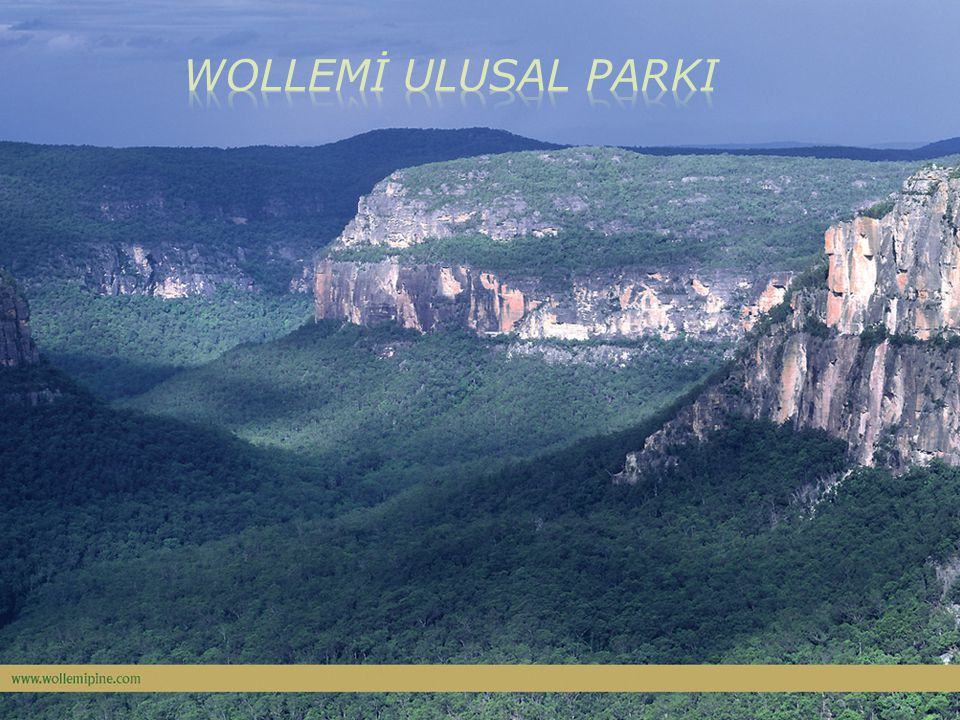 WOLLEMİ ULUSAL PARKI