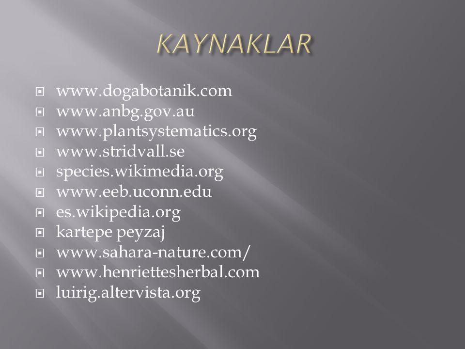 KAYNAKLAR www.dogabotanik.com www.anbg.gov.au www.plantsystematics.org