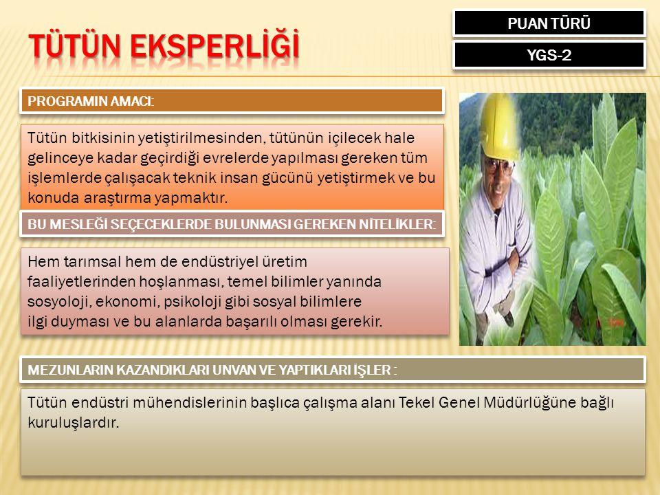 TÜTÜN EKSPERLİĞİ PUAN TÜRÜ YGS-2