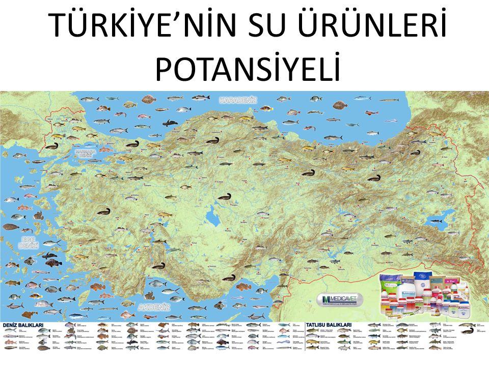 TÜRKİYE'NİN SU ÜRÜNLERİ