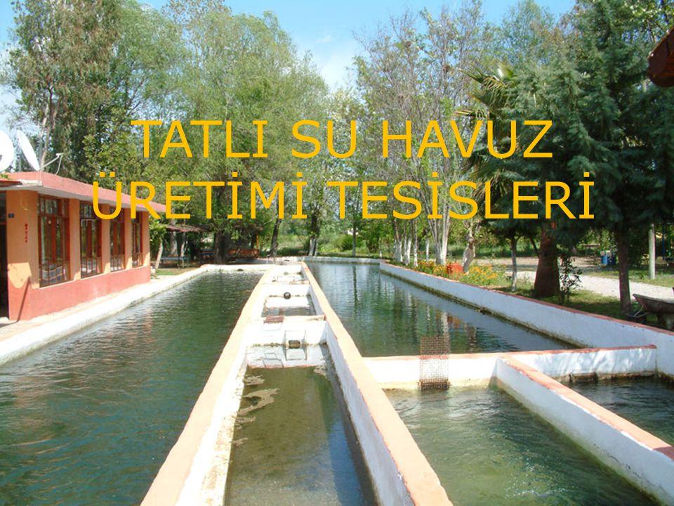 TATLI SU HAVUZ ÜRETİMİ TESİSLERİ