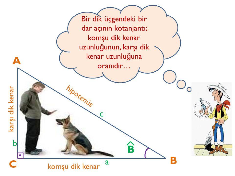 Bir dik üçgendeki bir dar açının kotanjantı; komşu dik kenar uzunluğunun, karşı dik kenar uzunluğuna oranıdır…