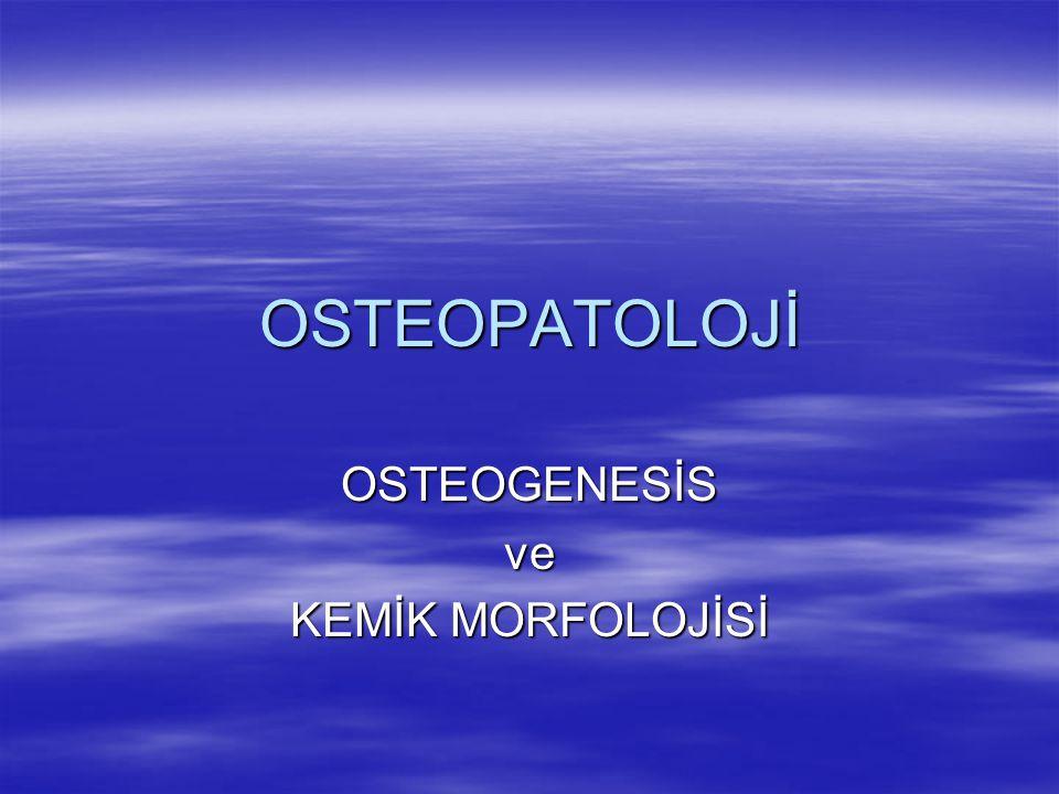 OSTEOGENESİS ve KEMİK MORFOLOJİSİ