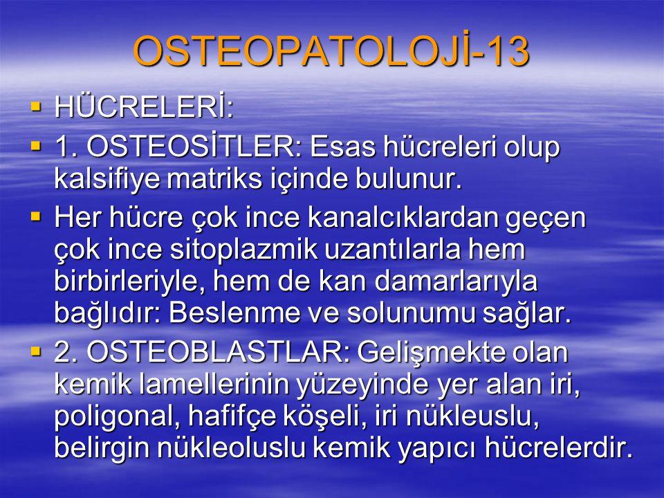 OSTEOPATOLOJİ-13 HÜCRELERİ: