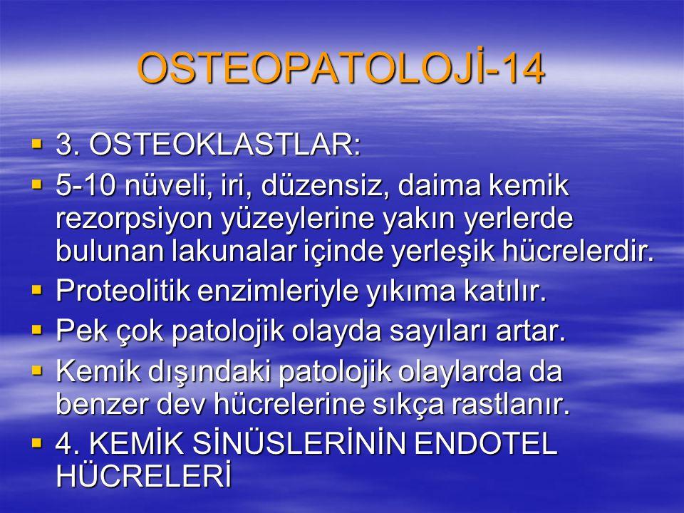 OSTEOPATOLOJİ-14 3. OSTEOKLASTLAR: