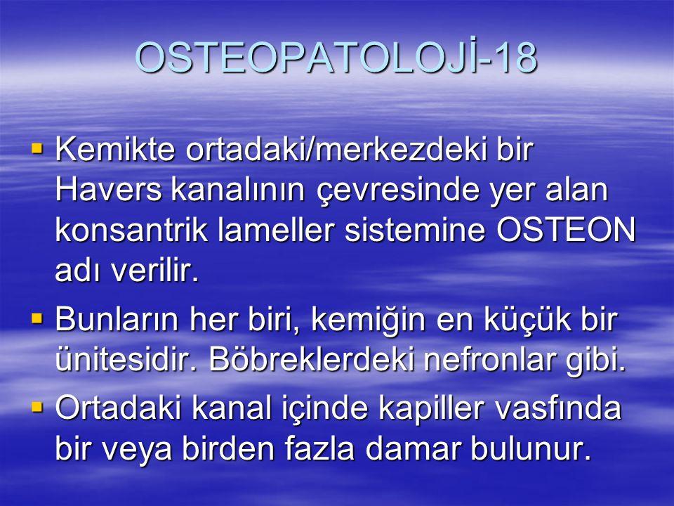 OSTEOPATOLOJİ-18 Kemikte ortadaki/merkezdeki bir Havers kanalının çevresinde yer alan konsantrik lameller sistemine OSTEON adı verilir.