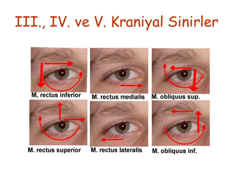III., IV. ve V. Kraniyal Sinirler