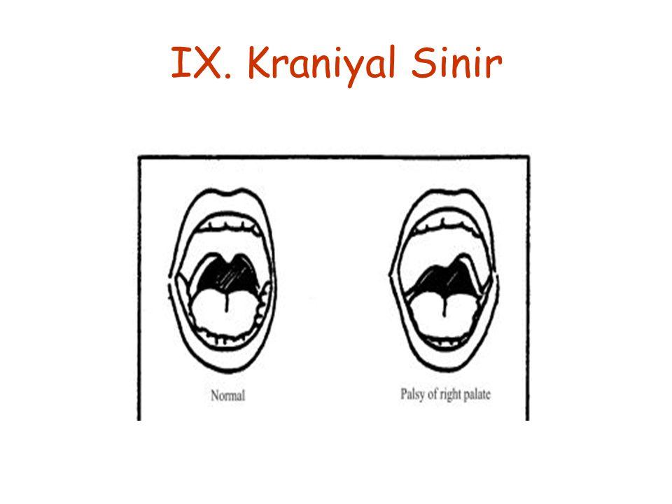 IX. Kraniyal Sinir