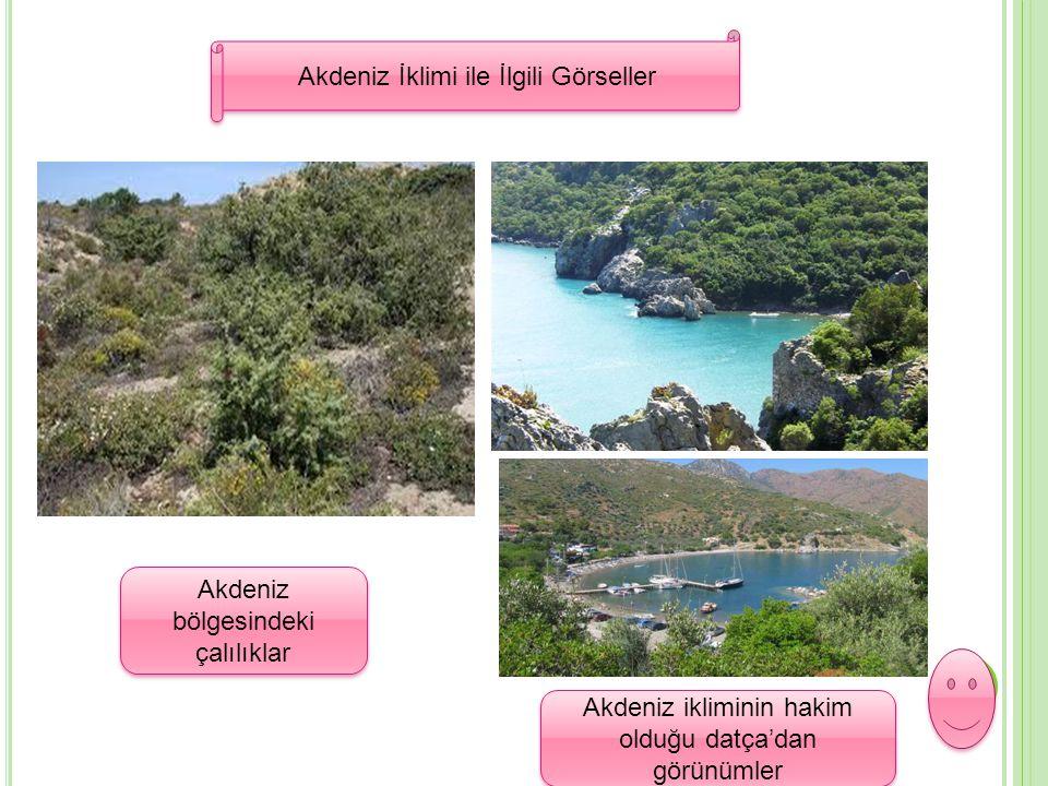 Akdeniz İklimi ile İlgili Görseller