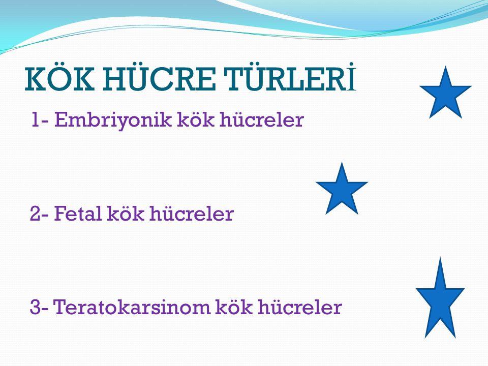 KÖK HÜCRE TÜRLERİ 1- Embriyonik kök hücreler 2- Fetal kök hücreler 3- Teratokarsinom kök hücreler