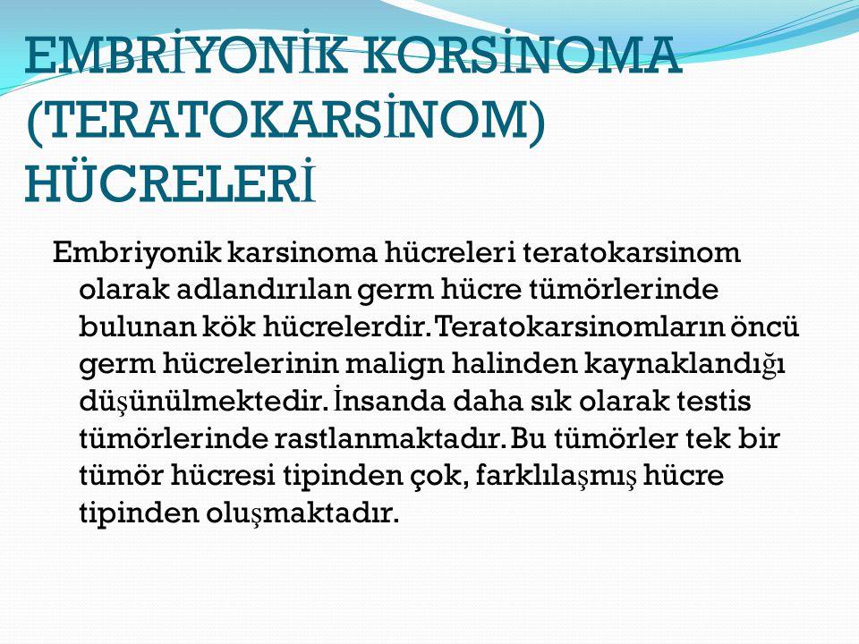 EMBRİYONİK KORSİNOMA (TERATOKARSİNOM) HÜCRELERİ