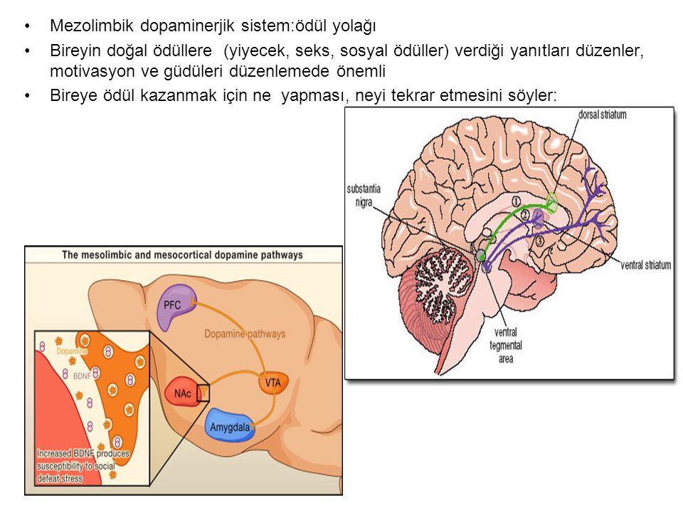 Mezolimbik dopaminerjik sistem:ödül yolağı