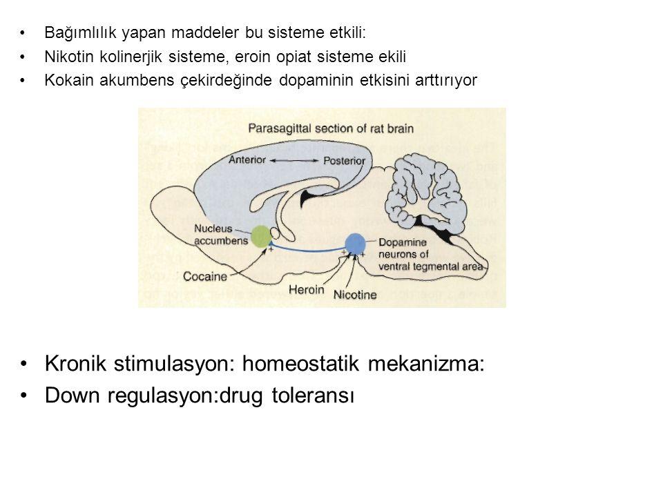 Kronik stimulasyon: homeostatik mekanizma: