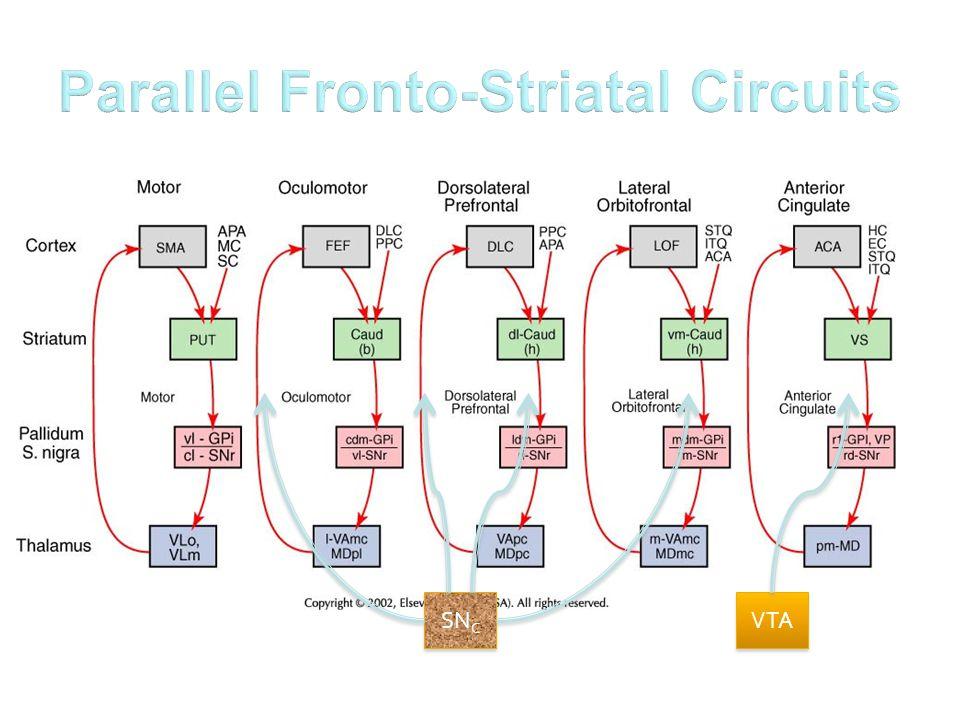 Parallel Fronto-Striatal Circuits