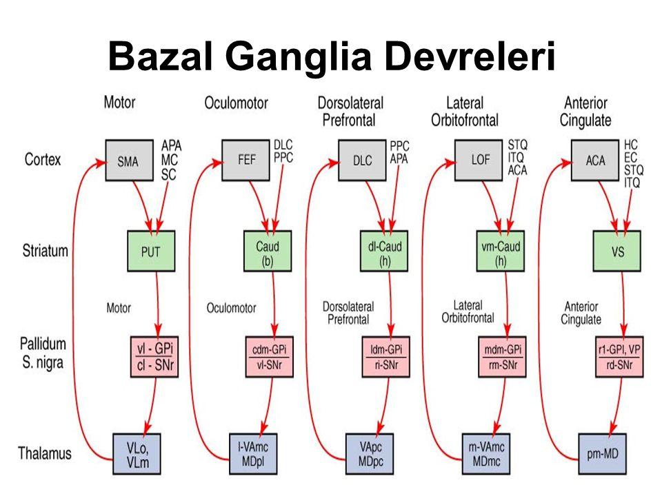 Bazal Ganglia Devreleri