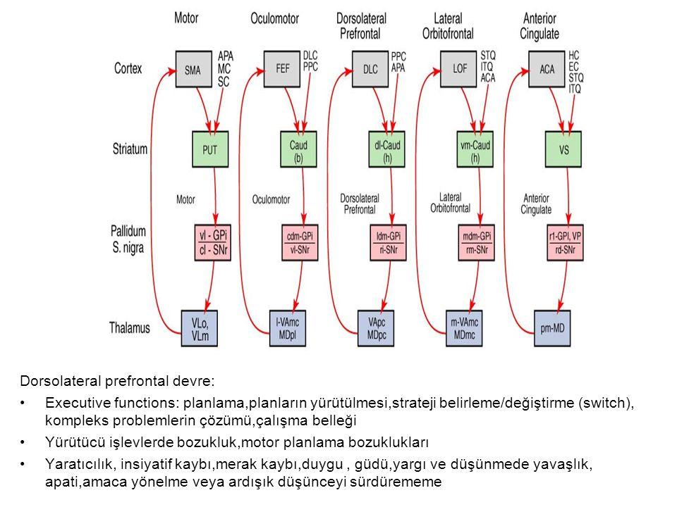 Dorsolateral prefrontal devre: