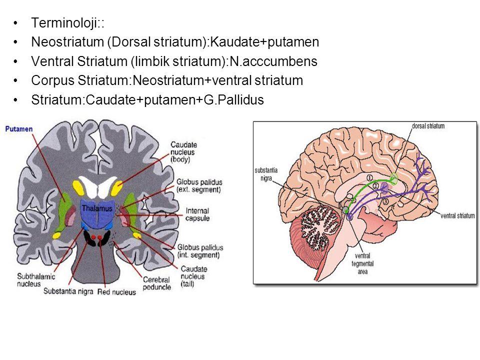 Terminoloji:: Neostriatum (Dorsal striatum):Kaudate+putamen. Ventral Striatum (limbik striatum):N.acccumbens.