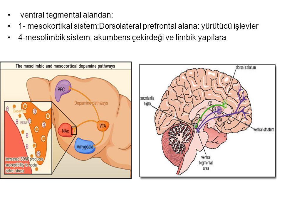 ventral tegmental alandan: