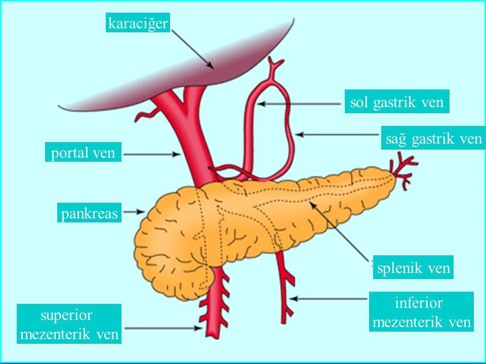 karaciğer sol gastrik ven. sağ gastrik ven. portal ven. pankreas. splenik ven. inferior. mezenterik ven.