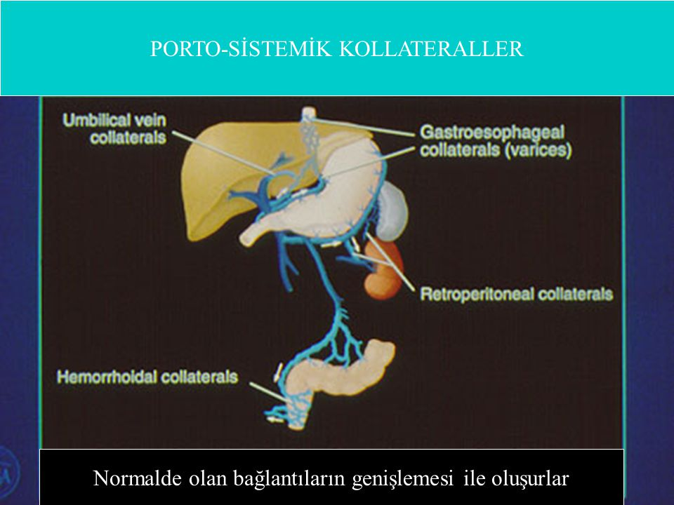 PORTO-SİSTEMİK KOLLATERALLER