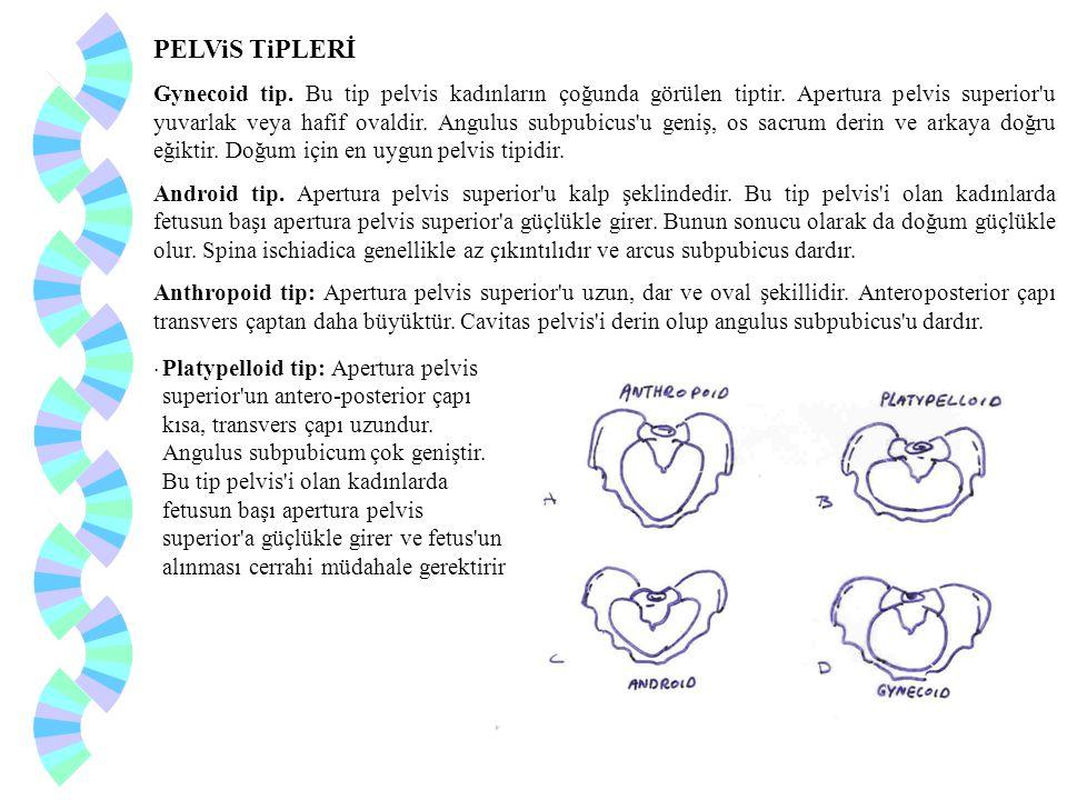 PELViS TiPLERİ