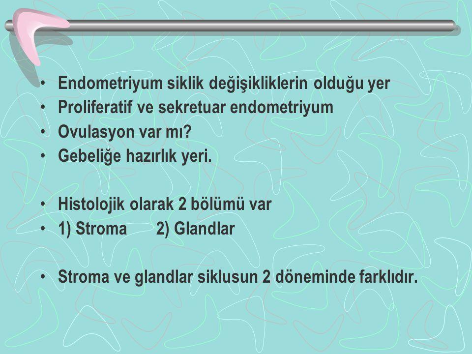 Endometriyum siklik değişikliklerin olduğu yer