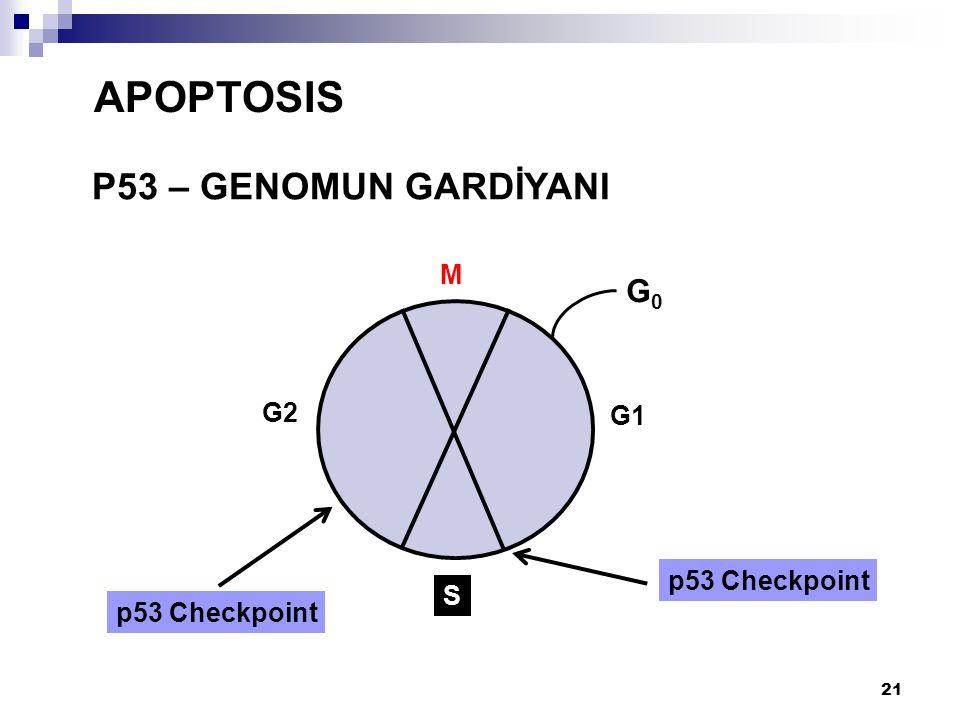 APOPTOSIS P53 – GENOMUN GARDİYANI M G0 G2 G1 p53 Checkpoint S