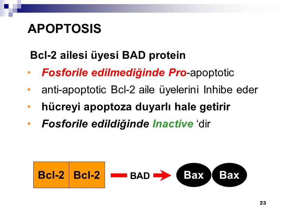 APOPTOSIS Bcl-2 ailesi üyesi BAD protein